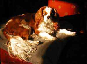 Bentley, the world's most lovable Cavalier King Charles Spaniel