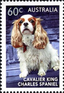 Australian postage stamp featuring a Cavalier King Charles Spaniel.