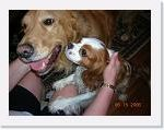 Bentley, a Cavalier King Charles Spaniel, and his best friend Tucker