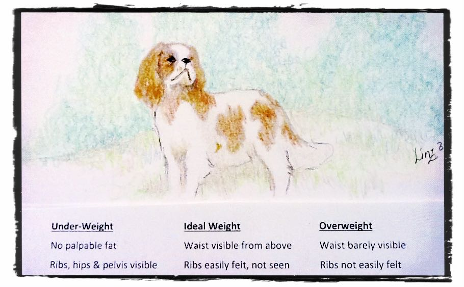 Image of weight guidelines for Cavalier King Charles Spaniels