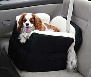 A Cavalier King Charles Spaniel in his car seat