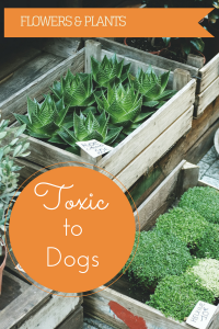 Graphic image warning that flowers and plants can be toxic to dogs.