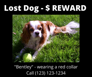 Example Lost Dog Poster